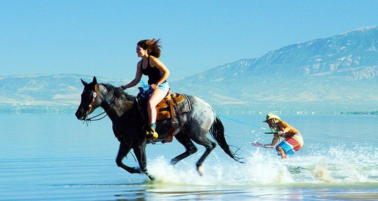 surf horses video extremard