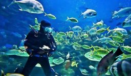 buceo repdom extremard1